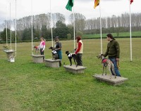 Whippet derby FCI 2005
